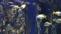 Aquarium, Fish Tank, Marine Animals Stock Footage