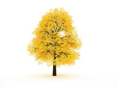Trees with yellow leaf isolated rendered Stock Illustration