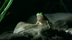Green frog jump on the night Stock Footage