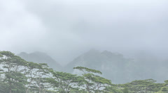 Time Lapse of Raining Rain Forest Canopy, Oahu, Hawaii Stock Footage