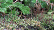 Stock Video Footage of Wet moss close up with other green botanic pan motion