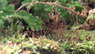 Stock Video Footage of Wet moss close up with other green botanic still start and pan motion