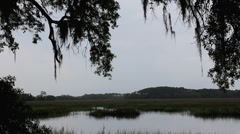 Tree branches spanish moss marsh land Stock Footage