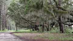 Dirt road spanish moss covered oak trees Stock Footage