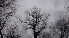 Moving grey clouds and crows on trees in winter Stock Footage