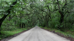 Wet tree canopy dirt road in rain Stock Footage