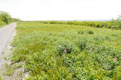 Field Stock Photos