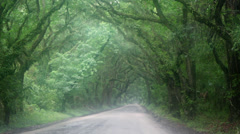 Rain foggy dirt road tree canopy Stock Footage