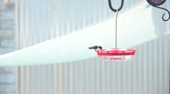 Hummingbird colibri slo mo wide arrives feeder drinks Stock Footage