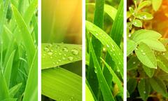 Stock Illustration of Nature banners