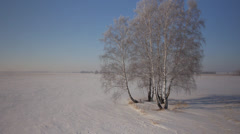 Stock footage aerial view Russian winter, snow-covered fields birch 5 Stock Footage