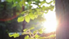Sun Rays Through Forest Tree Stock Footage