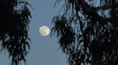 Establishment shot of full moon swaying leaves wide Stock Footage