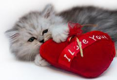 Cute persian kitten holding red heart isolated on white Stock Photos