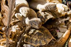 Reptiles for sell - stock photo