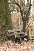 Bench in the park during winter season Stock Photos