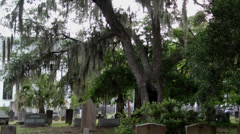 historic cemetery spanish moss church - stock footage