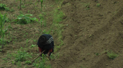 Woman hoeing weeds in a field Stock Footage