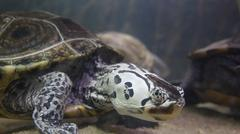 Turtles, Tortoises, Reptiles, Animals, Wildlife - stock photo