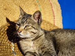 Cat basking in the sun - stock photo
