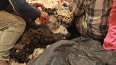 Sheep shearing, lamb, farm, farming, countryside Stock Footage