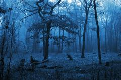 Trees in a forest with fog and autumn leaves on the ground Stock Photos