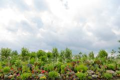 beautiful formal flower garden, copy space above - stock photo