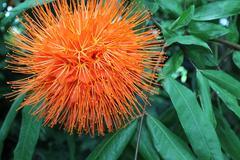 Orange Funky Flower - stock photo