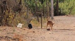 Stray Dog Walks Down Littered Dirt Road Stock Footage