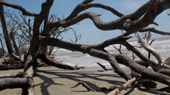 Dead tree bone yard beach edisto island Stock Footage