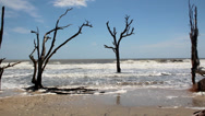 Stock Video Footage of dead oak trees in sea