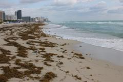 Florida Beach - stock photo