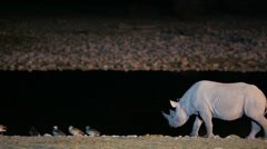 Rhino walking near waterhole Stock Footage