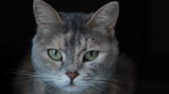 Grey cat with green eyes in the darkness Stock Footage