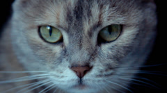 Grey cat with green eyes in the darkness, close up Stock Footage
