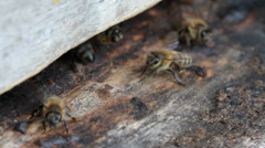 Group of honeybees flying Stock Footage