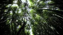 Bamboo rainforest Sagano plant harvest canopy Arashiyama Japan Stock Footage
