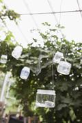 Lanterns hanging in greenhouse Stock Photos