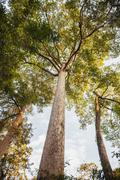 Low angle view of tree - stock photo