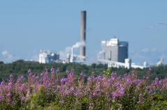 Flowering wildflowers, factory in background Stock Photos