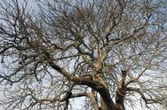 Stock Photo of Low angle view of bare tree