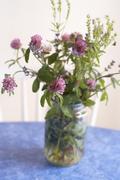 Clover flowers in jar Stock Photos