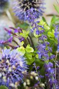 Close-up of purple flowers Stock Photos