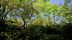Koch Sanso Japanese sculpture ornate garden Kyoto travel Japan Asia Stock Footage