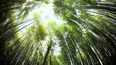 Kyoto Bamboo forest natural environment canopy harvest  Japan Stock Footage