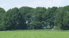 Cyclists across dike under row of trees, Dutch Grebbe Line (Grebbelinie) Stock Footage