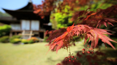 Koch Sanso garden Daijokaku Mountain Villa Japanese Maple Kyoto - stock footage