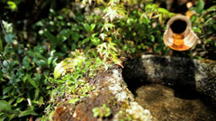 Koch Sanso Japanese garden water spring Kyoto travel Japan Asia Stock Footage