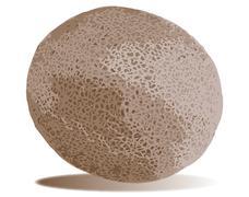 Persian melon Stock Illustration