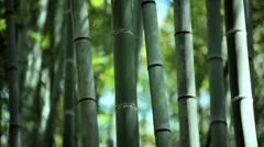 Bamboo forest sunlight Sagano canopy harvest travel Arashiyama Kyoto - stock footage